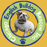 Chicago English Bulldog Rescue