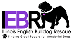 Illinois English Bulldog Rescue